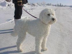 Oh my favorite...a winter walk.