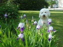 Mommy loves flowers