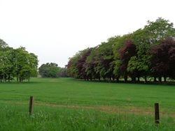 Gordon Castle tree lined avenue