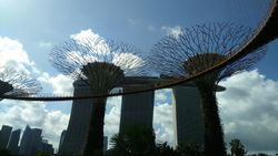 Singapur- Supertree Grove