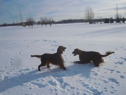 Playing in the snow (and subzero temps)
