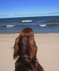 Marquette beach