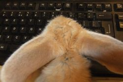 Athena of our 2012 litter updating her FB status.