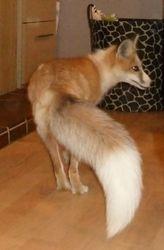 Beautiful tail