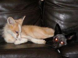 Callie and Ranger