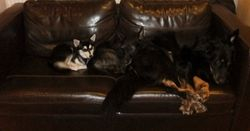 There were three. . . on the sofa