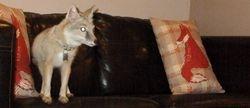 My sofa fox
