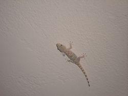 Wee gecko.