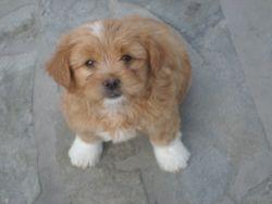 Martin, the Cosydog.