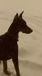 Lincoln's first snow