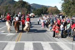 Parade Horses 2
