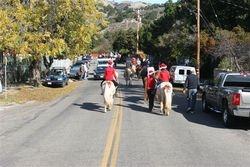 Parade Horses 4