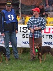 Kelpie Hillclimb Winner Aussie with Adam Ward 2nd Place Dusty with Shane Beauglehall
