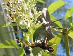 Munching Mantis 2