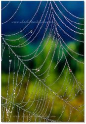 Natures pearls