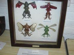 Fantastic specimens!