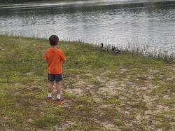 Ducks at Blue Pond