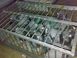 Luis Chiu's Stockbirds