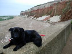 Morning walkies at the beach