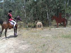Zaayne meets a light horse.....