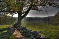 Cemetary Ridge