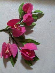 Bougainvillea Spray