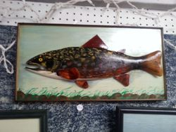 FRESH WATER BROWN TROUT
