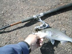 The rod...