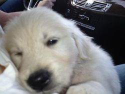 Tired boy on ride home :-)