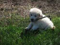 I love sticks and leaves!!