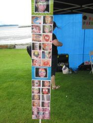 Pay per face boards