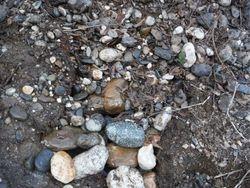 can you see where I dug?