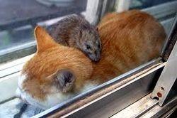 Mouse'a'Cat