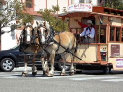 Draft Horses Pulling Wagon.