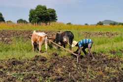 zemljoradnja u Etiopiji