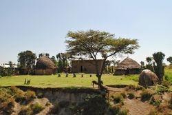 seoce kraj puta u juznoj Etiopiji