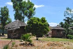 naseobine u Savani Etiopije