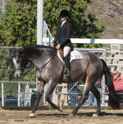 "Samantha Walker riding ""Zip N Jazzy"", owned by Lisa Pope"