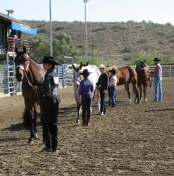 Youth mares