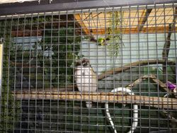 ANIMAL RESCUERS July 23 2015