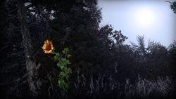 #1 - Flowers