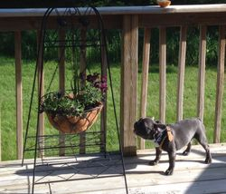 Barking at the flower pot!  So cute!