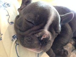 It's exhausting being so cute!