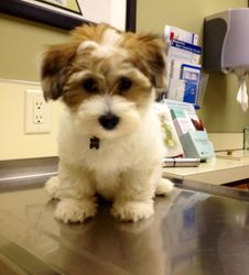 First visit to the vet
