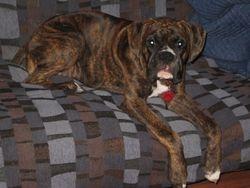 Samson 6 months