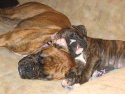 Abby and Samson buddies