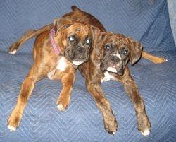Abby and Samson