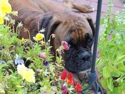 Abby in the Garden