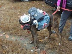 Samson the rescue dog for Halloween