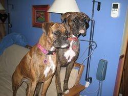 Abby 2yrs & Samson 1yr